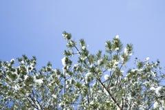 Árboles cubiertos por la nieve Fotografía de archivo