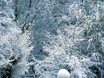 Árboles cubiertos por la nieve Foto de archivo libre de regalías