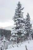 Árboles cubiertos por la nieve en Gaspesie Imágenes de archivo libres de regalías