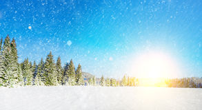 Árboles cubiertos y nieve Fotografía de archivo