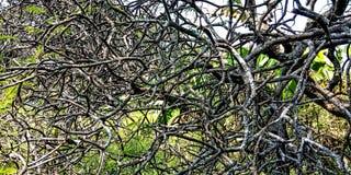 Árboles cuyos troncos se asemejan a raíces imagen de archivo libre de regalías