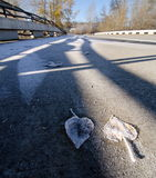 Árboles de álamo congelados en el puente en 116th Imagen de archivo libre de regalías