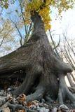 Árboles de abajo abajo Foto de archivo