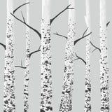 Árboles de abedul ilustración del vector