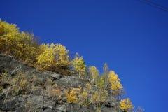 Árboles de abedul amarillo en la roca, cielo azul en otoño Imagen de archivo libre de regalías