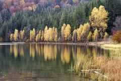 Árboles de abedul amarillo por el lago Paisaje con el lago y el bosque Fotografía de archivo