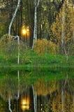 Árboles de abedul cerca del agua Imágenes de archivo libres de regalías
