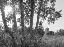 Árboles de abedul con el faro de madera viejo en el backround Fotografía de archivo