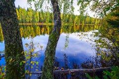 Árboles de abedul con las hojas sobre el agua del lago Autumn Landscape Imágenes de archivo libres de regalías