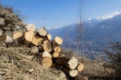 Árboles de abedul de Cutted en un paisaje de la montaña Foto de archivo