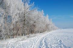 Árboles de abedul debajo de la nieve Imagen de archivo