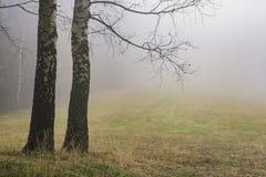 Árboles de abedul del otoño Imagenes de archivo