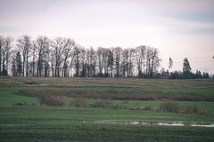 Árboles de abedul del otoño con las ramas desnudas - mirada de la película del vintage Fotos de archivo libres de regalías