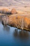 Árboles de abedul del otoño en orilla del agua Imagen de archivo