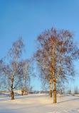 Árboles de abedul desnudos en una cuesta, invierno Foto de archivo