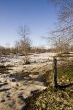 Árboles de abedul desnudos y cielo azul en la primavera temprana Nieve en algunos lugares Fotos de archivo
