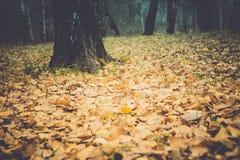 Árboles de abedul en Autumn Park Retro Imagen de archivo libre de regalías