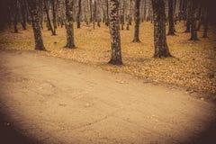 Árboles de abedul en Autumn Park Retro Fotografía de archivo libre de regalías