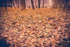 Árboles de abedul en Autumn Park Retro Fotos de archivo