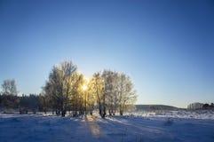 Árboles de abedul en día de invierno frío Imágenes de archivo libres de regalías