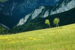 Árboles de abedul en el medio de un prado Fotos de archivo