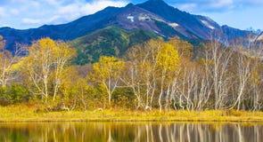 Árboles de abedul en el otoño que refleja en el lago en el fondo o Fotos de archivo libres de regalías