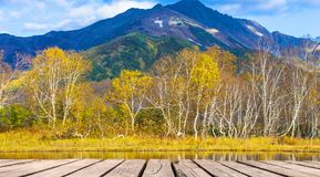 Árboles de abedul en el otoño que refleja en el lago en el fondo o Fotografía de archivo