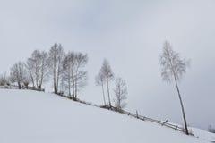 Árboles de abedul en invierno Fotos de archivo