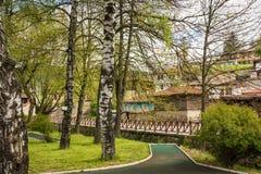 Árboles de abedul en Koprivshtitza, Bulgaria Fotos de archivo