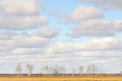 Árboles de abedul en la caída Imagen de archivo libre de regalías