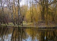 árboles de abedul en la isla en el medio del agua Fotos de archivo libres de regalías