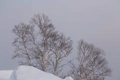 Árboles de abedul en la nieve durante nevadas Fotos de archivo