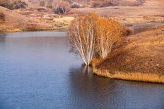 Árboles de abedul en la orilla del agua en otoño Imágenes de archivo libres de regalías
