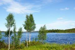 Árboles de abedul en la orilla del lago azul Fotos de archivo libres de regalías