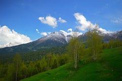 Árboles de abedul en las montañas Imágenes de archivo libres de regalías