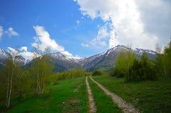 Árboles de abedul en las montañas Fotos de archivo libres de regalías