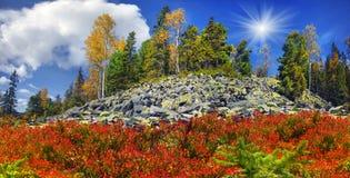 Árboles de abedul en las rocas Fotografía de archivo libre de regalías