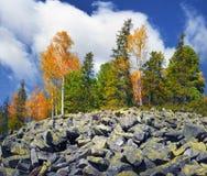 Árboles de abedul en las rocas Fotos de archivo