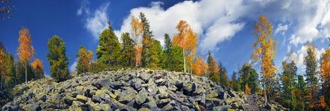 Árboles de abedul en las rocas Imagenes de archivo