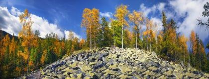 Árboles de abedul en las rocas Imágenes de archivo libres de regalías
