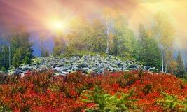 Árboles de abedul en las rocas Fotos de archivo libres de regalías
