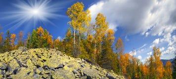 Árboles de abedul en las rocas Imagen de archivo libre de regalías
