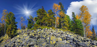 Árboles de abedul en las rocas Fotografía de archivo