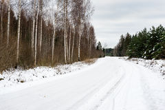 árboles de abedul en nieve del invierno Fotografía de archivo