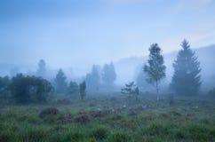 Árboles de abedul en tierra en niebla densa Imagen de archivo libre de regalías