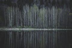Árboles de abedul hermosos en la orilla del lago Fotografía de archivo