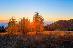 Árboles de abedul jovenes con las hojas del amarillo rodeadas por las montañas Fotografía de archivo