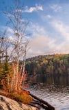 Árboles de abedul junto a un lago con colores de la caída Imágenes de archivo libres de regalías