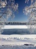 Árboles de abedul nevados que se colocan en el banco del río Fotografía de archivo libre de regalías