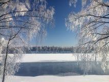 Árboles de abedul nevados que se colocan en el banco del río Fotos de archivo libres de regalías